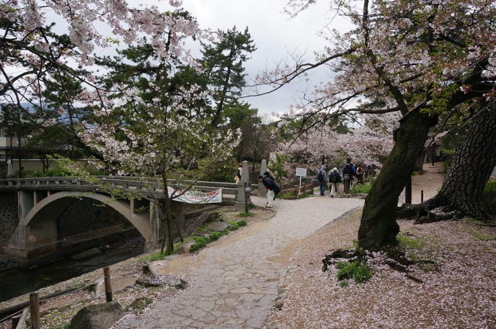 夙川沿いの桜並木